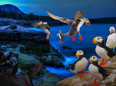 Puffins Bedding Down Poster