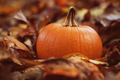 Pumpkin In Leaves Poster