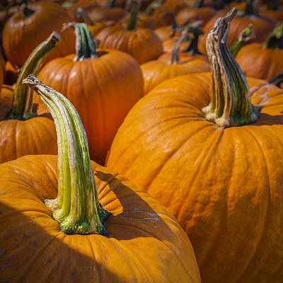 Pumpkin Patch  Poster by Scott Campbell
