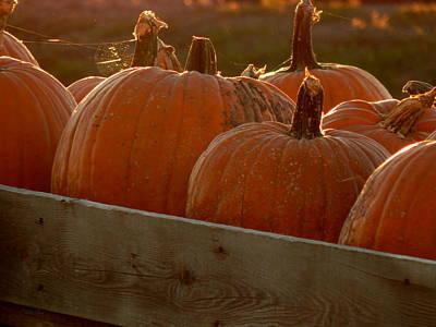 Pumpkin Webbed Light Poster