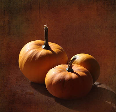 Pumpkins Poster by Angie Vogel