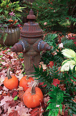 Pumpkins By The Hydrant Poster by John Rizzuto
