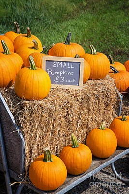 Pumpkins For Sale Poster by Jane Rix