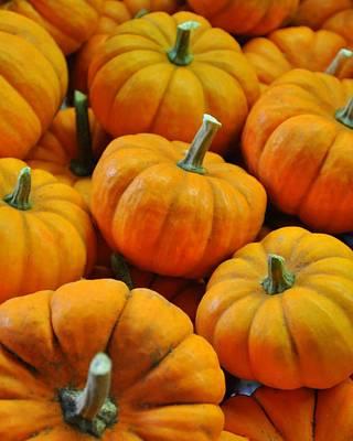 Pumpkins Poster by Jeff Cook