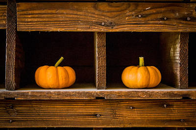 Pumpkins On Display Poster