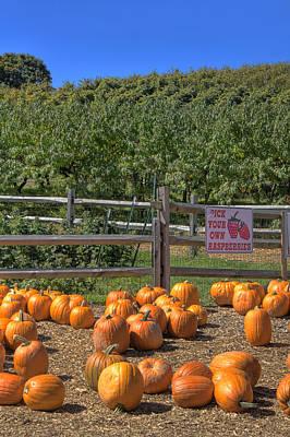 Pumpkins On The Farm Poster by Joann Vitali