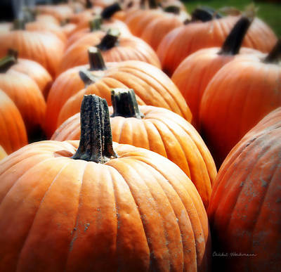 Pumpkins Plenty Poster by Cricket Hackmann
