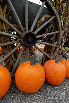 Pumpkins With Old Wagon Poster by Amy Cicconi