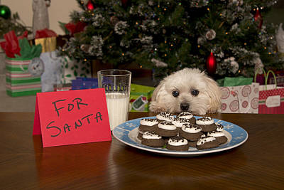 Puppy Checking Out Christmas Cookies Poster