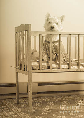 Puppy Dog In A Baby Crib Poster by Edward Fielding