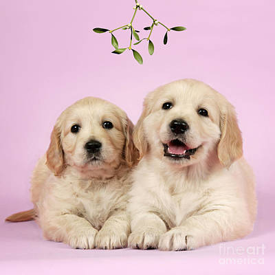 Puppy Dogs And Mistletoe Poster