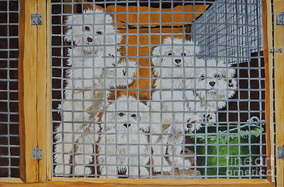 puppy mill Maltese Poster by Laura Bolle