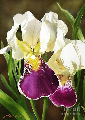 Purple And White Iris Poster by Joan A Hamilton