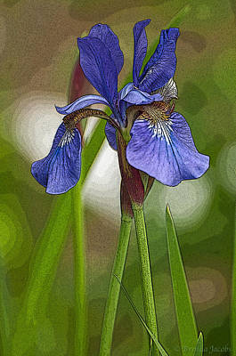 Poster featuring the photograph Purple Bearded Iris Watercolor With Pen by Brenda Jacobs