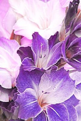 Purple Bouquet Gladiola Flowers Poster by Jennie Marie Schell
