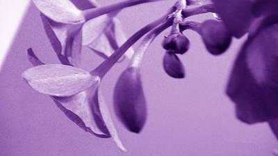 Purple Charm Poster