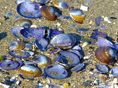 Purple Clam Shells On A Beach Poster