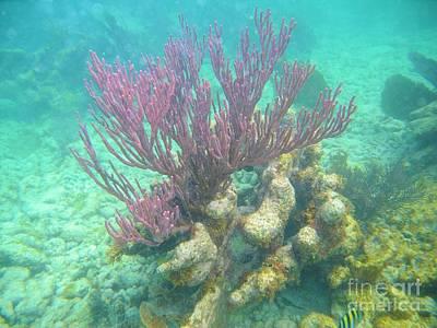 Purple Coral Poster