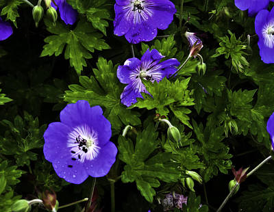 Poster featuring the photograph Purple Flower01 by Timothy Latta