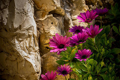 Purple Flowers And Rocks Poster