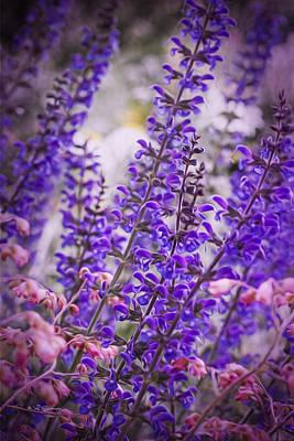 Purple Flowers Poster by Jeff Swanson