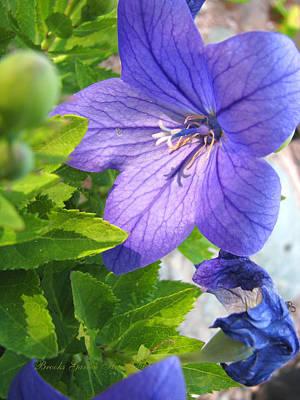 Purple Flowers Majesty Poster by Brooks Garten Hauschild