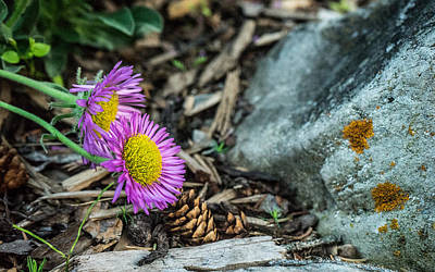 Purple Flowers Pine Cones And Lichens Poster