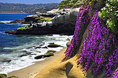 Purple Glory At La Jolla Cove Poster