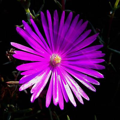 Purple Glow Poster by Pamela Walton