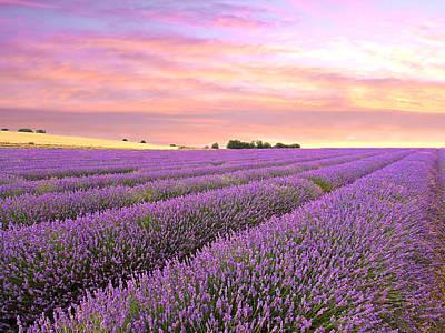Purple Haze - Lavender Field At Sunrise Poster by Gill Billington