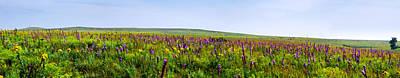 Purple Hills Poster by Eric Benjamin