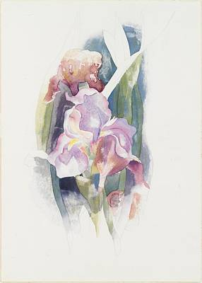 Purple Iris Poster by Charles Demuth