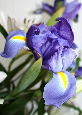 Poster featuring the photograph Purple Iris by Ellen O'Reilly
