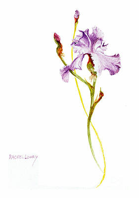 Poster featuring the painting Purple Iris by Rachel Lowry