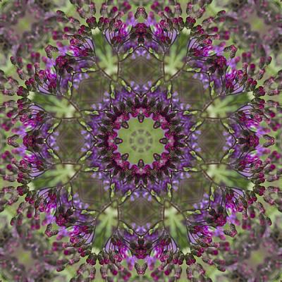 Purple Ironweed Kaleidoscope Poster by Kathy Clark