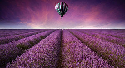 Purple Poster by Matthew Gibson