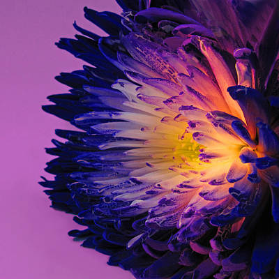 Purple Passion Poster by Don Spenner