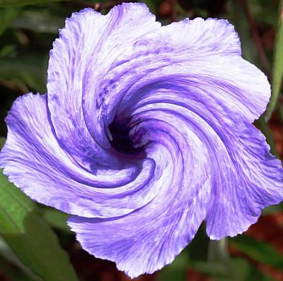 Purple Petunia Twirl Poster by Belinda Lee