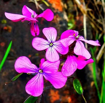 Purple Lunaria Poster by Karen Molenaar Terrell