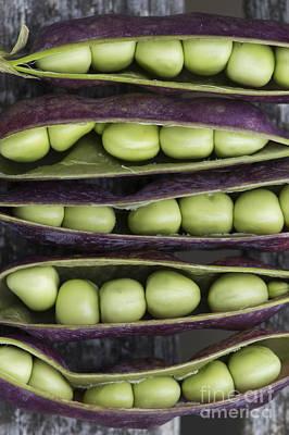 Purple Podded Pea Pattern Poster