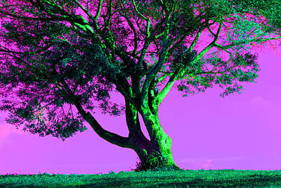 Purple Sky Tree Poster