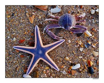 Purple Starfish And Crab Poster by Mark Lemmon