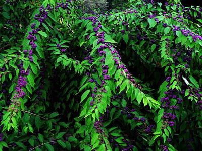 Purple Vibe Poster by Deborah  Crew-Johnson