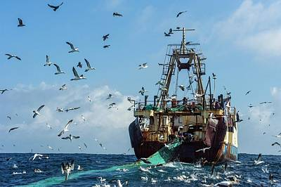 Purse-sein Trawler Pulling In Its Nets Poster by Peter Chadwick