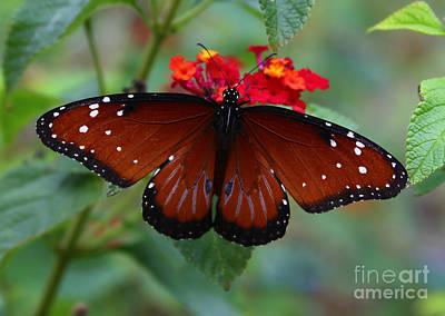 Queen Butterfly Poster by Marty Fancy