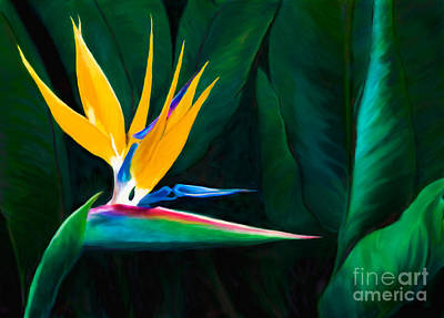 Painted Queen Of The Garden Bird Of Paradise Flower Poster by Sherry  Curry