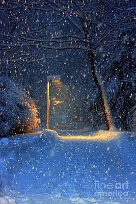 Quiet Night In Winter Poster by Marcia Lee Jones