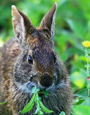 Rabbit Food Poster