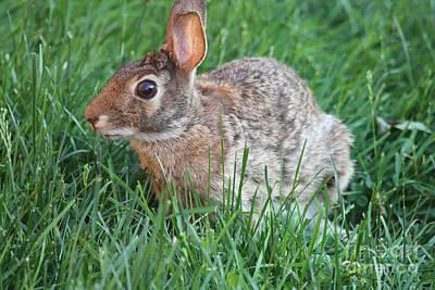 Rabbit On The Run Poster by John Telfer