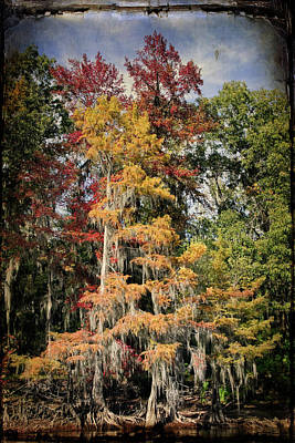 Raggedy Bayou Poster by Lana Trussell